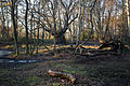 Epping Forest High Beach Waltham Abbey Essex England - forest floor.jpg