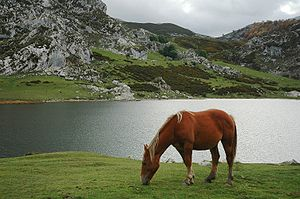 A horse in front of Ercina Lake