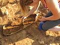 Excavación de enterramiento en ánfora de Sanisera.JPG