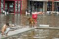 FEMA - 8621 - Photograph by Liz Roll taken on 09-19-2003 in Maryland.jpg