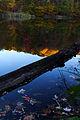 Fall reflections log lake - West Virginia - ForestWander.jpg