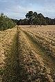 Farm track, Herringswell - geograph.org.uk - 1128433.jpg