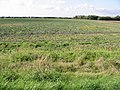 Farmland between the Abbot's Wall and the River Stour - geograph.org.uk - 963154.jpg