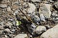 Fauna Torres del Paine.jpg