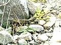 Fauna de la Huasteca - panoramio.jpg