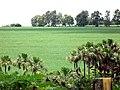 Fazenda Curralinho. Lavoura de soja, eucalipto, vereda. Paracatu MG - panoramio.jpg