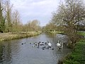 Feeding ducks and swans, the Itchen Navigation north of Tun Bridge, Winchester - geograph.org.uk - 26171.jpg