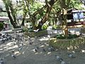 Fewa Tal bahari temple area.jpg