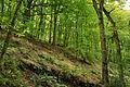 Fingle Woods (6263).jpg