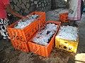 Fish packing.jpg