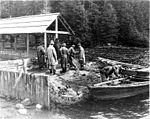 Fishermen hauling in a seine at the Alaska Packers Assoc Fortmann Hatchery near Loring, Alaska, September 11, 1908 (COBB 12).jpeg