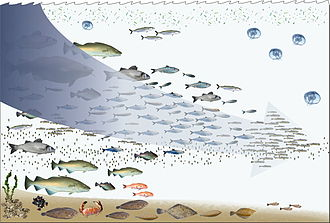 Human impact on the environment - Fishing down the foodweb