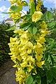 Fleur (Angiosperms) (30).jpg