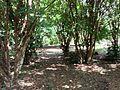 Floresta no Interior de Minas.JPG