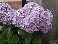 Flower20180527 184559.jpg