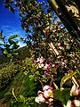 Flowering plants Photo by Giovanni Ussi 06.jpg
