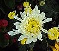 Flowers - Uncategorised Garden plants 239.JPG