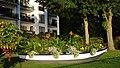 Flowers - panoramio (13).jpg