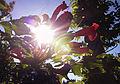 Flowers And Sunlight.jpg
