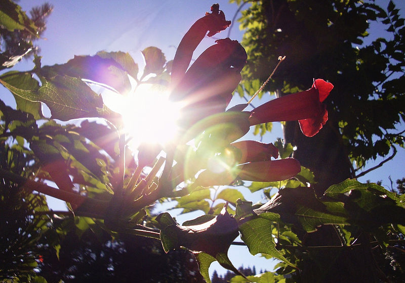 File:Flowers And Sunlight.jpg
