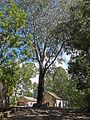 Fogo-Parc forestier de Monte Velha-Habitations (2).jpg