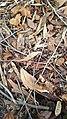 Folhas em Decomposição - Por Guilher Sendlemeier.jpg