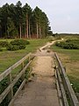Footbridge and path north of the Dibden Inclosure, New Forest - geograph.org.uk - 203809.jpg