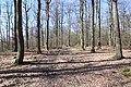 Forêt Départementale de Beauplan à Saint-Rémy-lès-Chevreuse le 14 mars 2018 - 04.jpg
