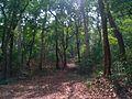 Forest area Kerala.jpg