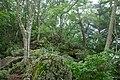 Forest in Mt.Futatsuya 04.jpg