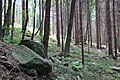 Forest near Canzo - panoramio.jpg