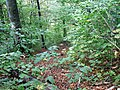 Forest on Mt Tampa, Brazov - panoramio.jpg