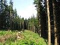 Forestry near Newarkburn - geograph.org.uk - 463644.jpg