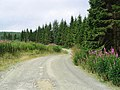 Forestry road at Rams Cleuch - geograph.org.uk - 535231.jpg