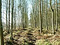 Forestry track, Greenknowe Farm - geograph.org.uk - 312265.jpg