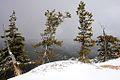 Four Trees, Bryce Canyon National Park, Utah (3446229999).jpg
