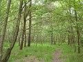 Frensham Common Country Park - geograph.org.uk - 17365.jpg