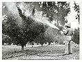 Fruit Spraying, Upper Moutere.jpg