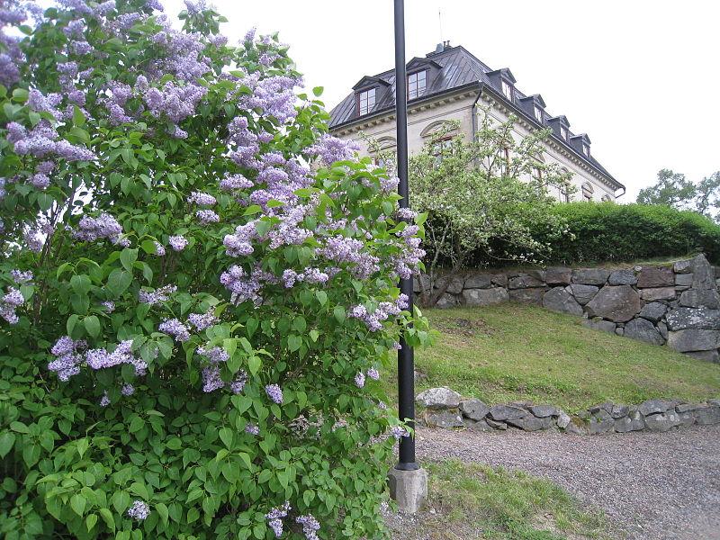 Görvälns Slottspark 2015-c1.jpg