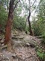 Garawarra Ridge - panoramio (2).jpg
