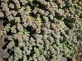 Gardenology-IMG 5263 hunt10mar.jpg