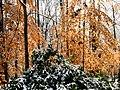 Georgia snow IMG 4629 (38947181351).jpg