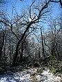 Georgia snow IMG 4857 (38231351394).jpg