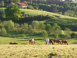 Geul - The Geul valley in Plombières, Belgium