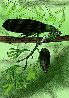 Titanoptera order of insects