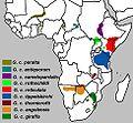 Giraffa camelopardalis subspecies map.jpg