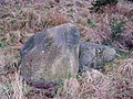 Glacial erratic in Drungie Wood - geograph.org.uk - 360659.jpg