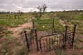 Gleeson Cemetery Gleeson Arizona.jpg