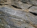 Gneiss (Precambrian; Rt. 93 roadcut next to the New River, Mouth of Wilson, Virginia, USA) 5 (30747059585).jpg