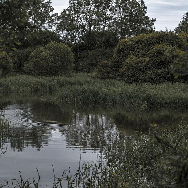 Au milieu des roseaux sur le lac de Grand-Lieu.
